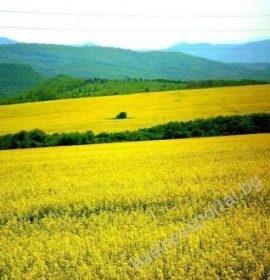 Агроком инвест ЕООД – Земеделски производител – гр. Плевен